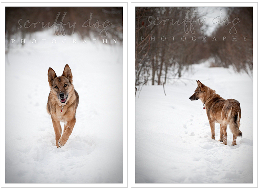 zoey-diptych