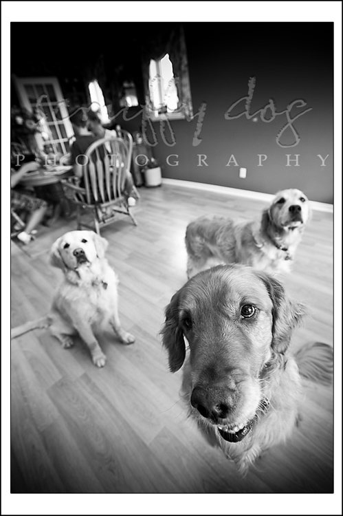 thompson-goldens-4-bw