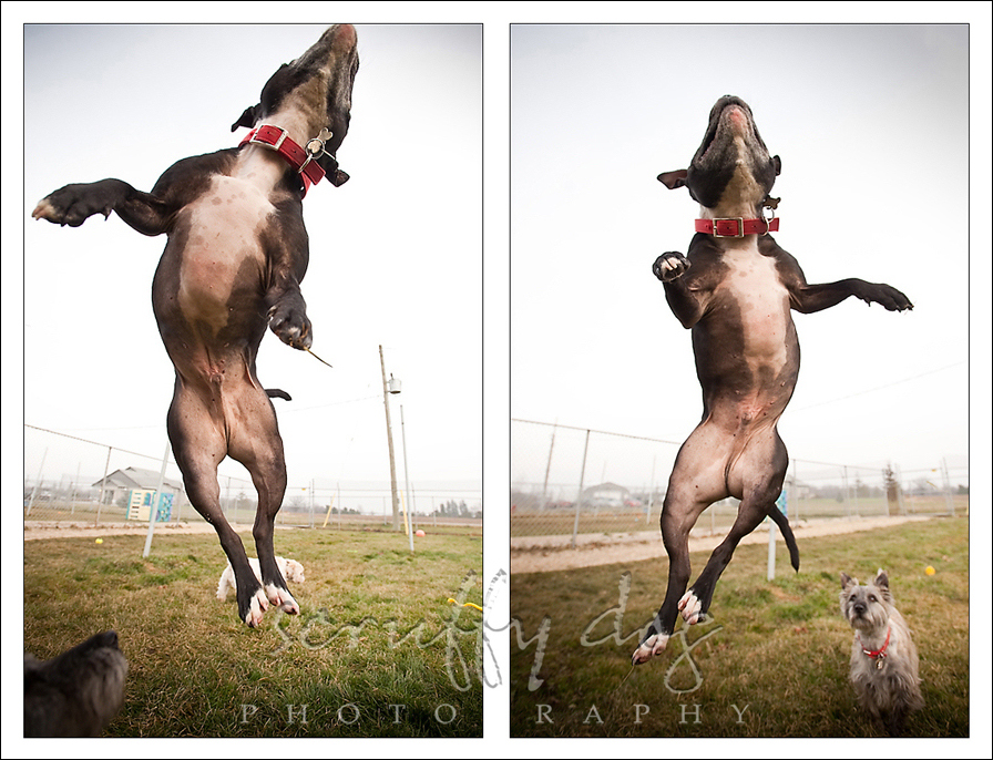 staffy-diptych4