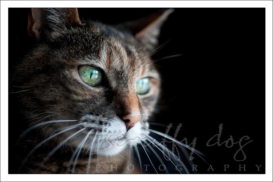 whiskerslayla-315