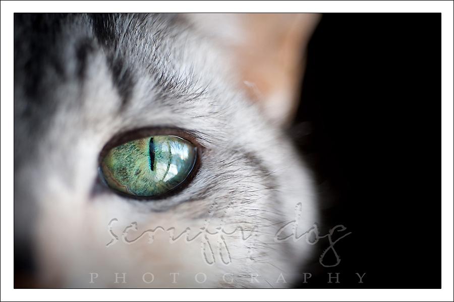 whiskerslayla-342