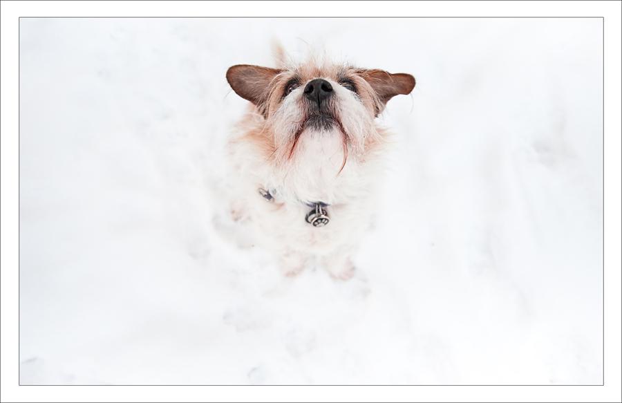 snowy-morley-6