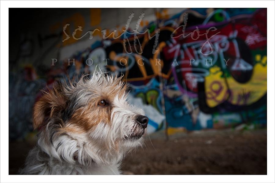 graffiti-348