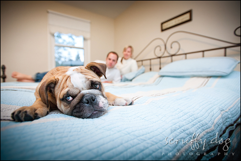 cute bulldog puppy photo