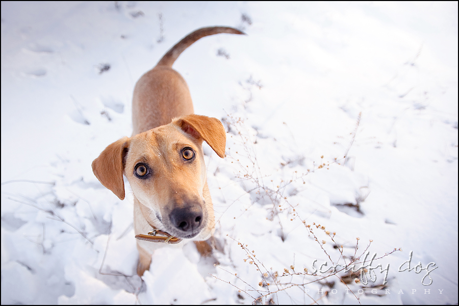 Hunting Dog Rescue Ontario
