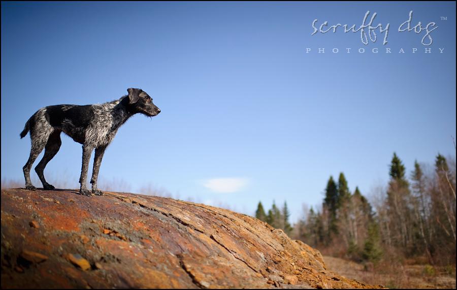 Seeing Eye Dog Training Ontario