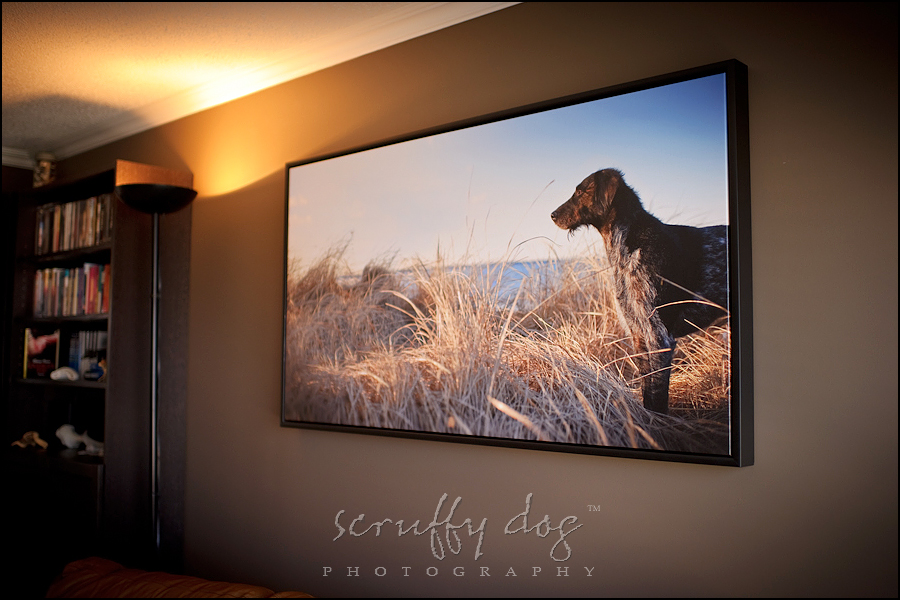 more big canvases ontario pet photographer scruffy dog