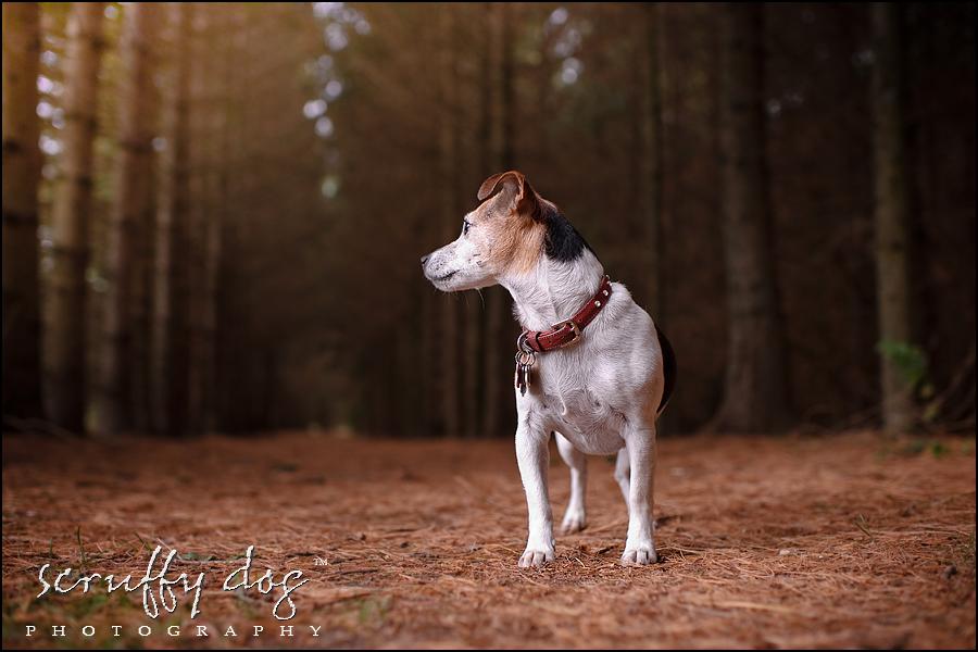 Adopting A Dog Waterloo