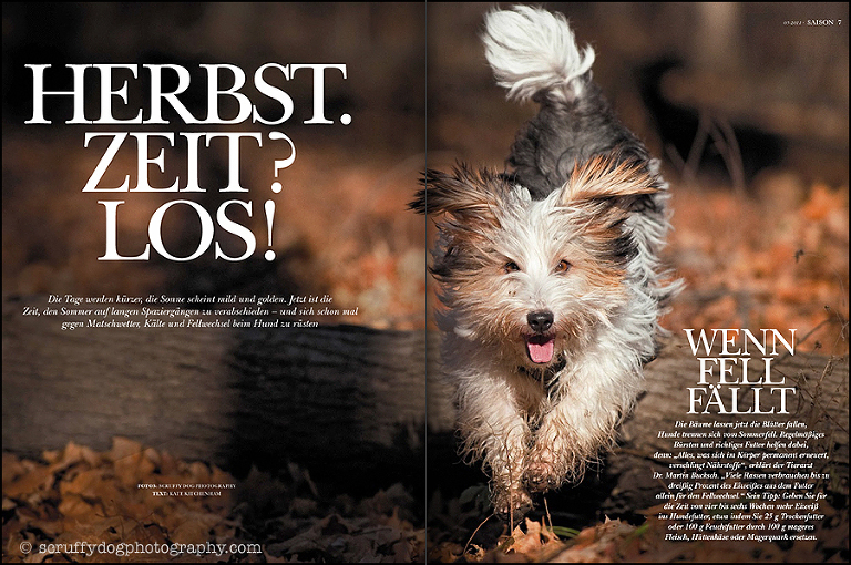 editorial dogs magazine pet photography
