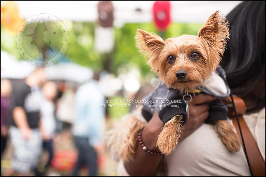 Scruffy Dog Photography Award Winning Professional Pet