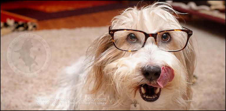 glasses-5 for mentoring for blog