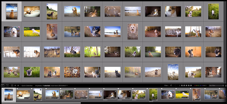 photos grid for mentoring for blog