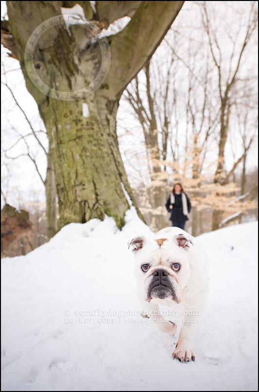 08-waterloo-ontario-dog-photographer-pet-bulldog-emma fleming-130