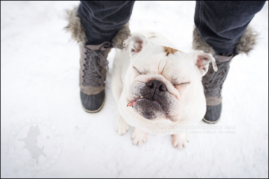 09-waterloo-ontario-dog-photographer-pet-bulldog-emma fleming-262