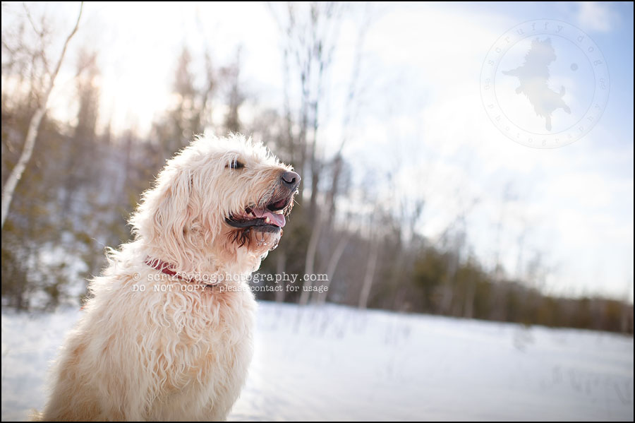 10-waterloo-pet-photographer-chewy huxley mathers-8