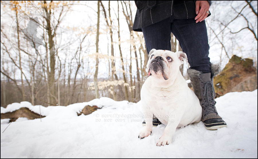 11-waterloo-ontario-dog-photographer-pet-bulldog-emma fleming-274