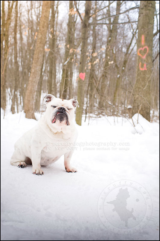13-waterloo-ontario-dog-photographer-pet-bulldog-emma fleming-311-Edit