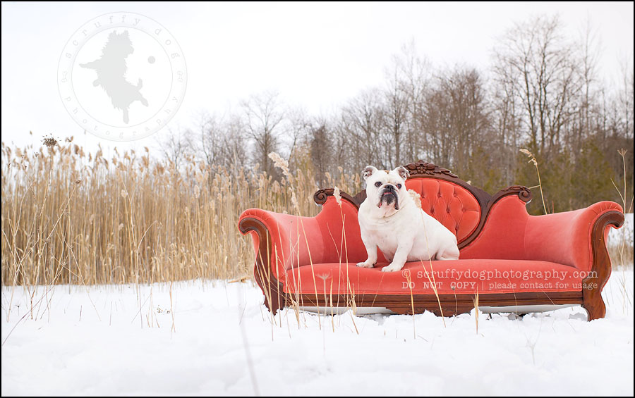 14-waterloo-ontario-dog-photographer-pet-bulldog-emma fleming-373