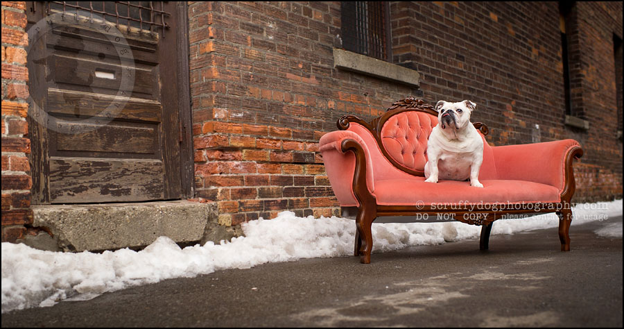 19-waterloo-ontario-dog-photographer-pet-bulldog-emma fleming-471
