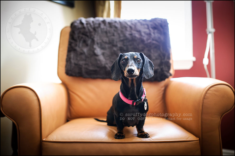 460-waterloo-dog-photography-lucy warford-21