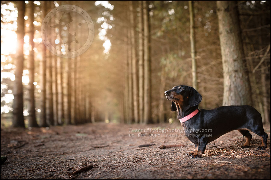 469-waterloo-dog-photography-lucy warford-890