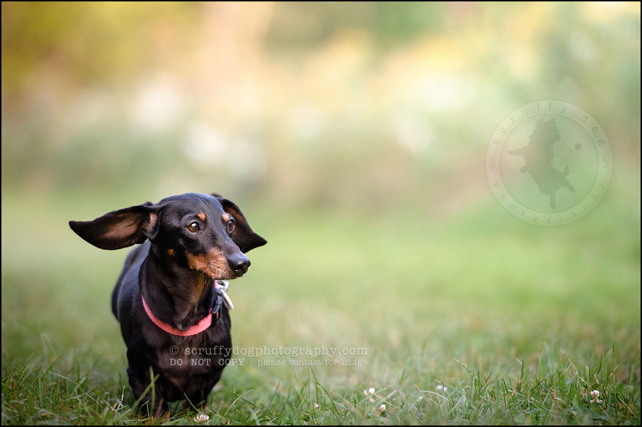 479-waterloo-dog-photography-lucy warford-552