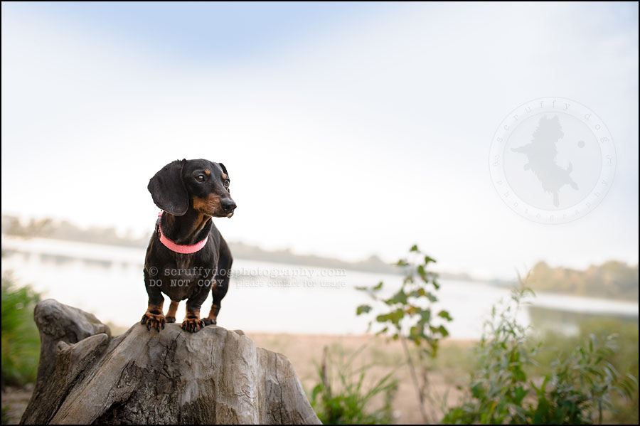 483-waterloo-dog-photography-lucy warford-945