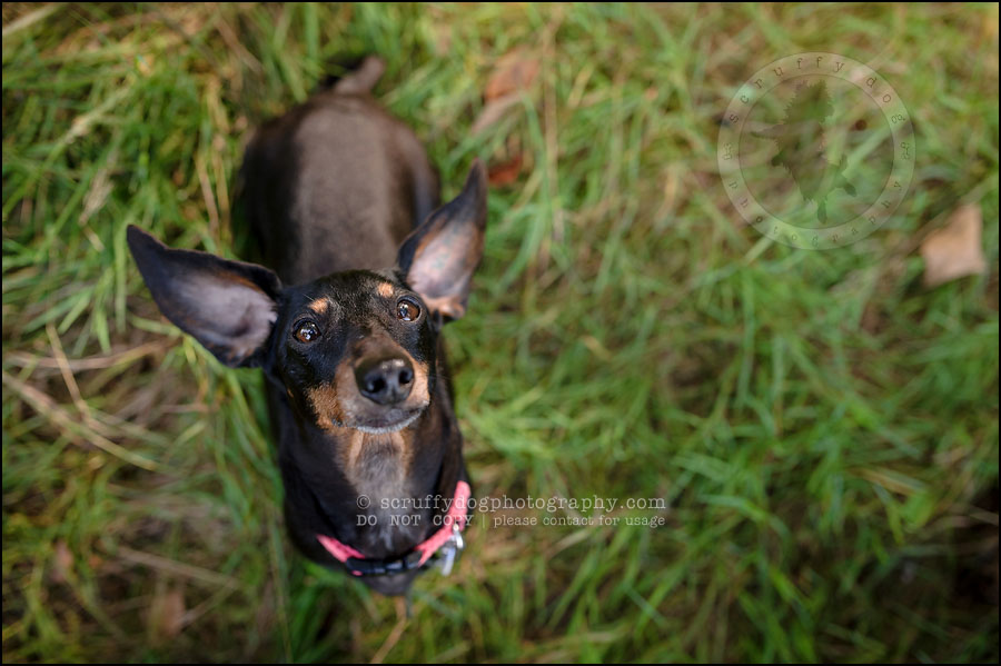 485-waterloo-dog-photography-lucy warford-783