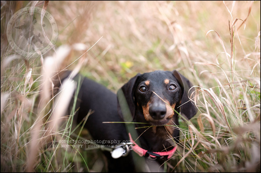 486-waterloo-dog-photography-lucy warford-994