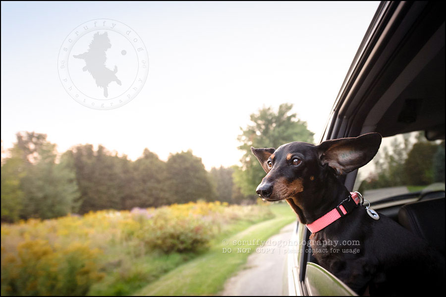 487-waterloo-dog-photography-lucy warford-711