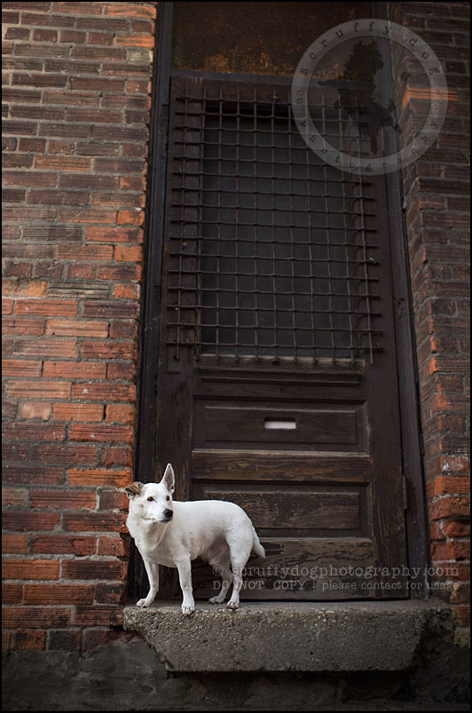 11 Burlington pet photographer jack russell cosmo debenedetti-361