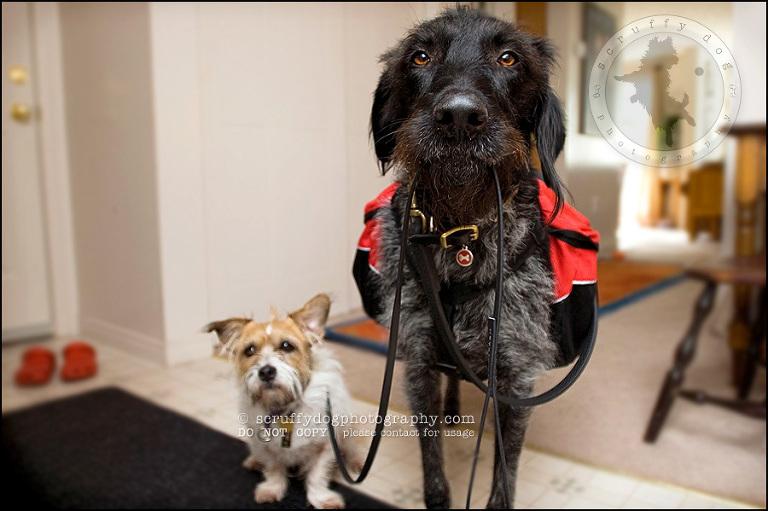 waterloo ontario stock pet photographer matea and morley walk