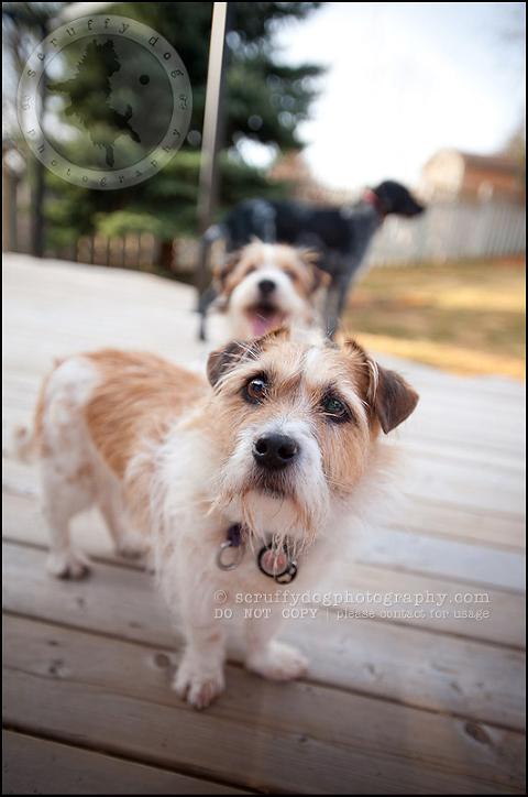 waterloo ontario dog stock photography day 12-70