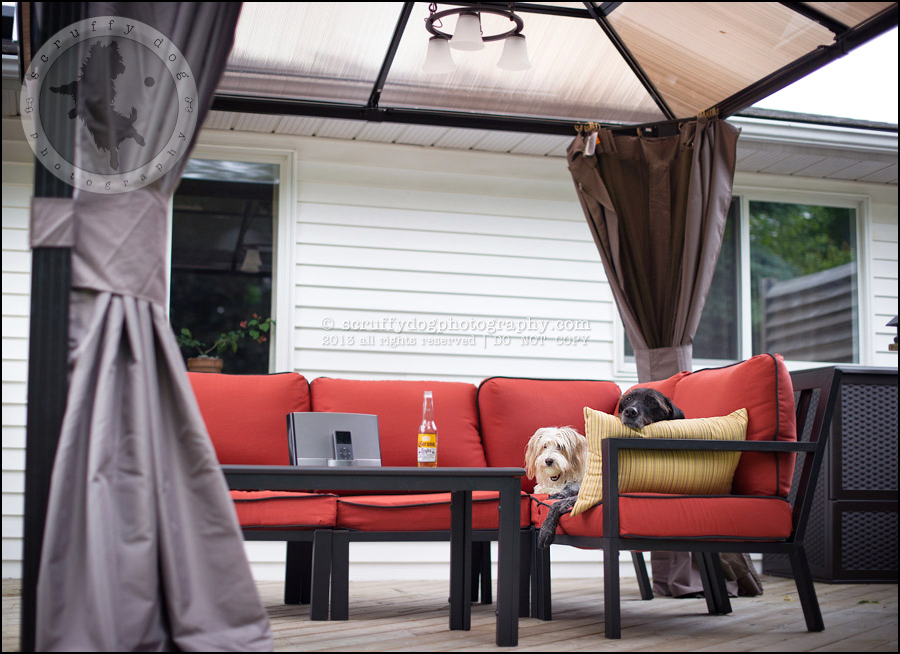 15_waterloo_ontario_pet_photographer_bulldog_patio-5
