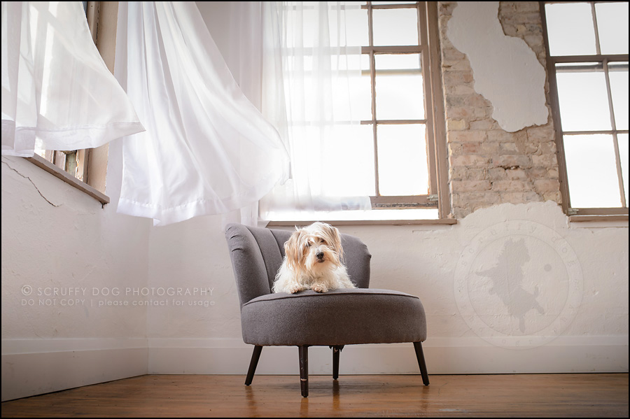 01 ontario studio pet photographer fan merrick-68-Edit