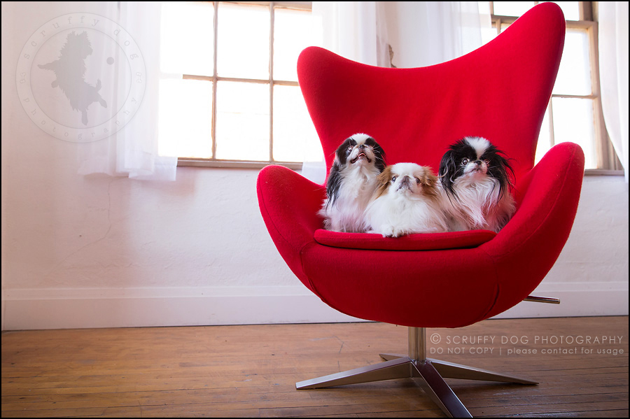 02 ontario studio pet photographer boey huey zoey szeto-1170