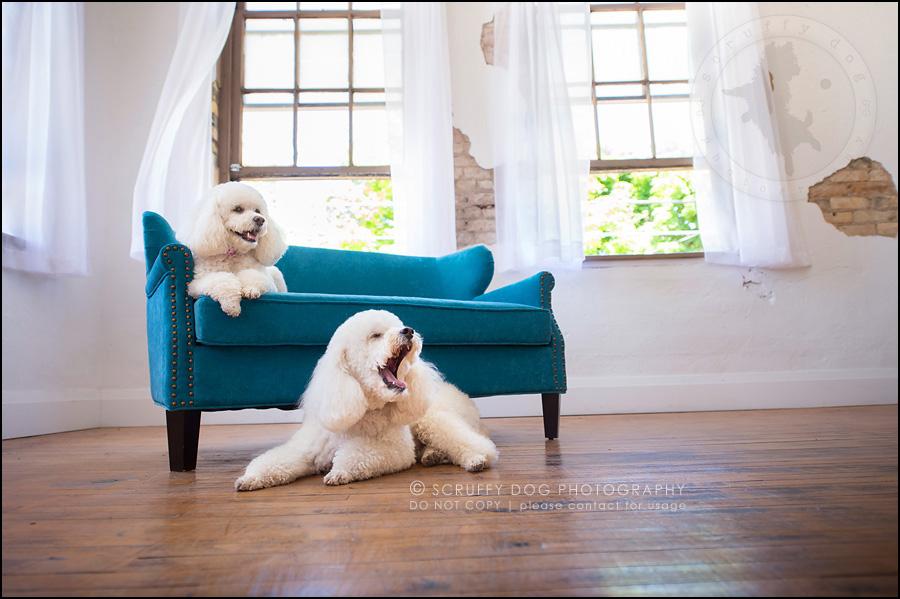 04 ontario studio pet photographer dwss-838