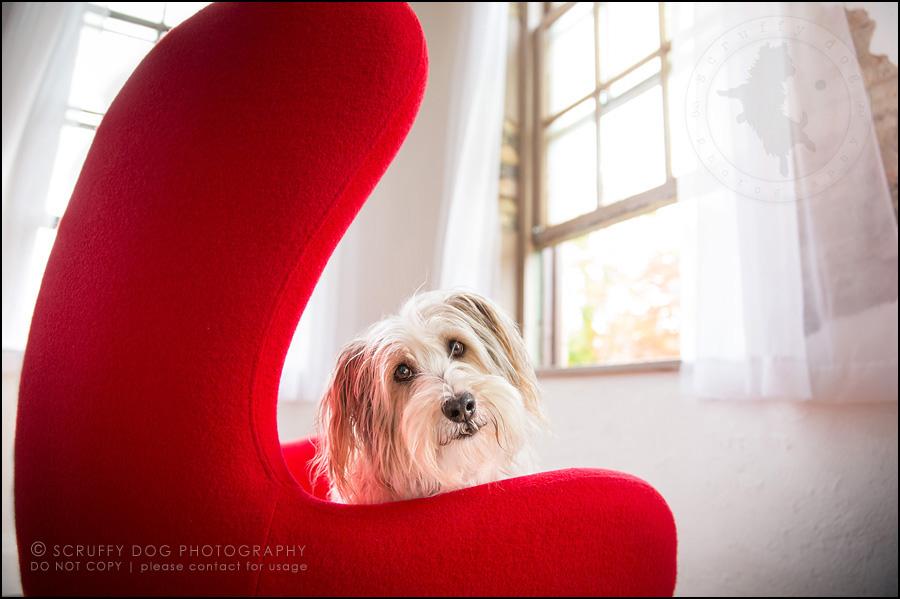 09 ontario studio pet photographer untitled-69