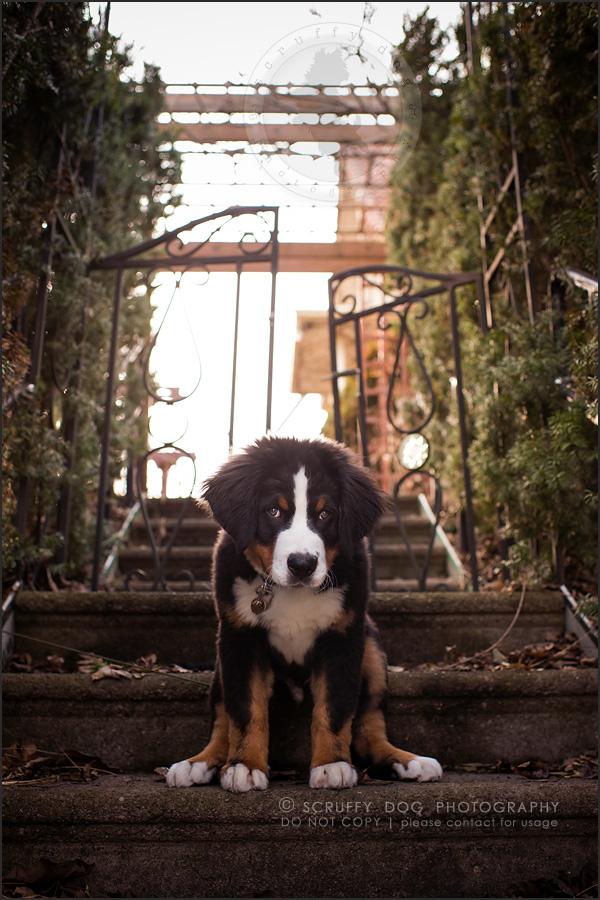 01_Kitchener_ontario_pet_photographer_bruin dawson smith-47