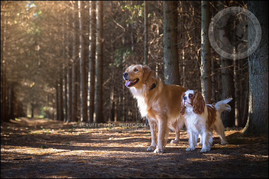 01_london_ontario_pet_photographer_brandi toby landry-165