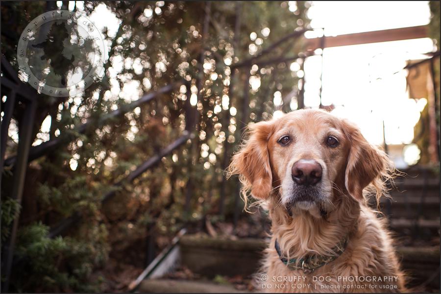 03_Kitchener_ontario_pet_photographer_bruin dawson smith-27