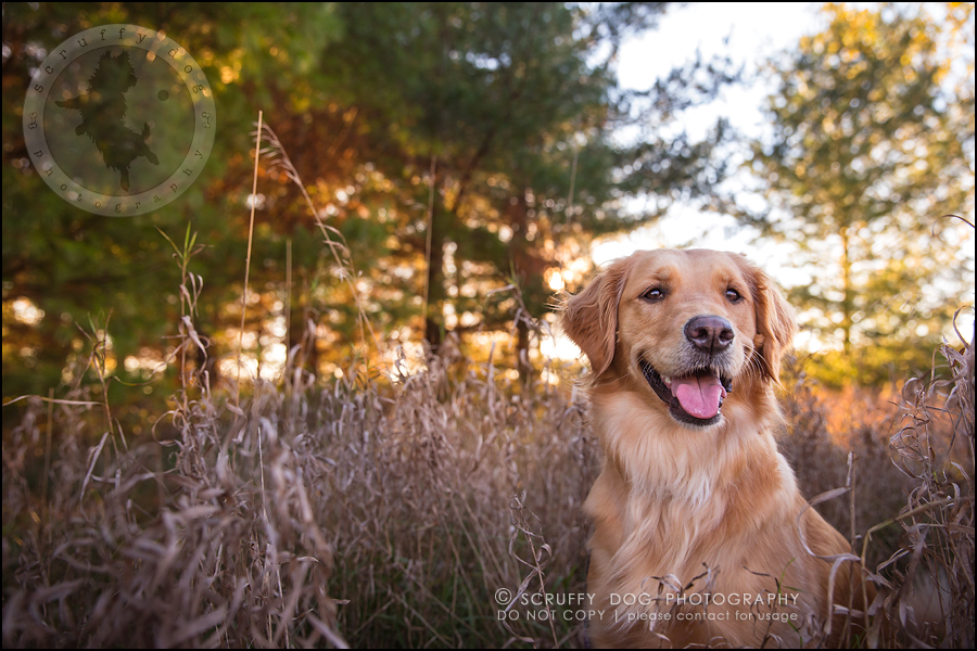 03_london_ontario_pet_photographer_brandi toby landry-180