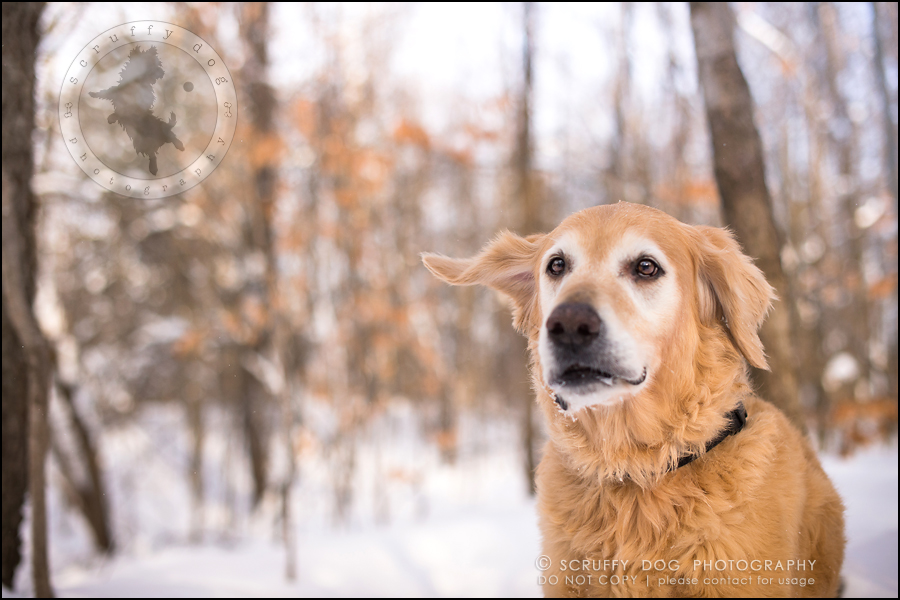 03toronto_ontario_pet_exclusive_photographer_diesel muffin hopkins-484