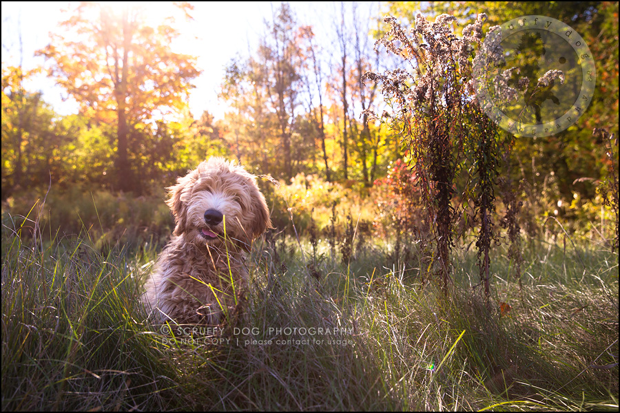 04_toronto_pet_photographer_amadeus wilcox-238