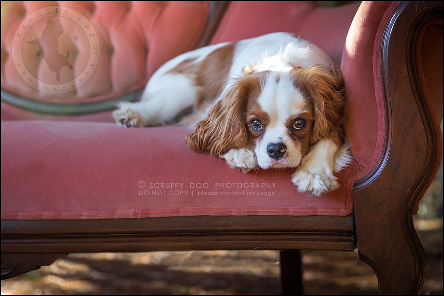 05_london_ontario_pet_photographer_brandi toby landry-25-Edit