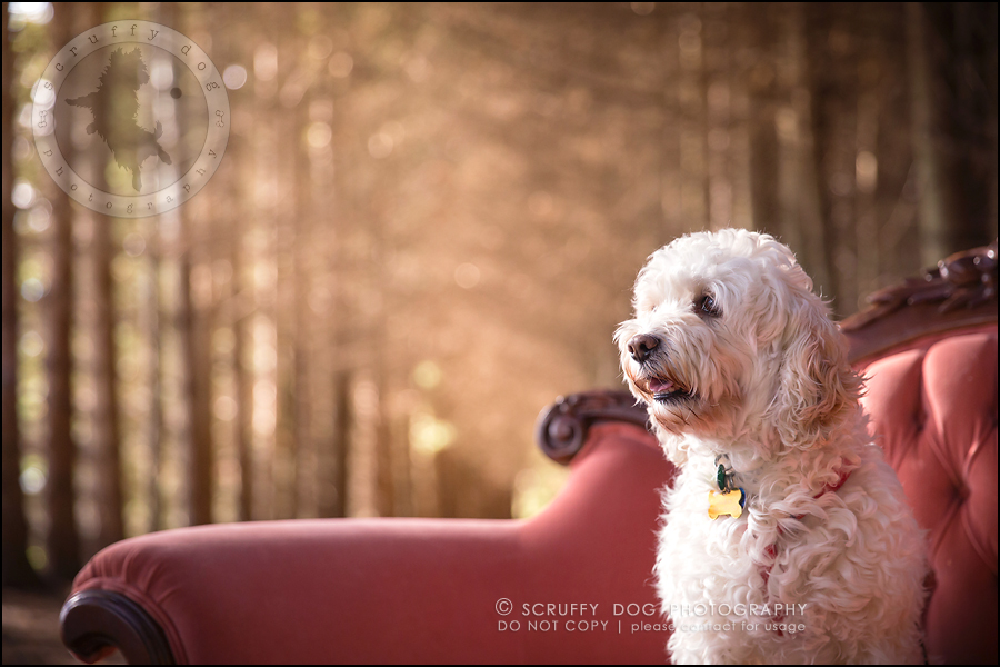 05waterloo_ontario_pet_exclusive_photographer_chinook george beckett-81