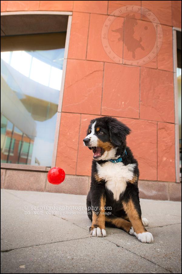 07_Kitchener_ontario_pet_photographer_bruin dawson smith-156-Edit