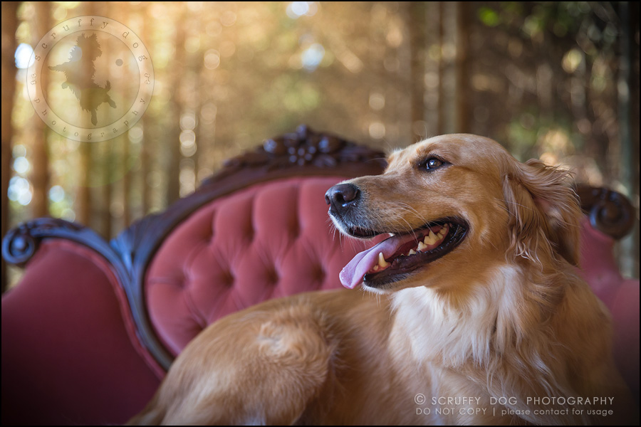07_london_ontario_pet_photographer_brandi toby landry-75