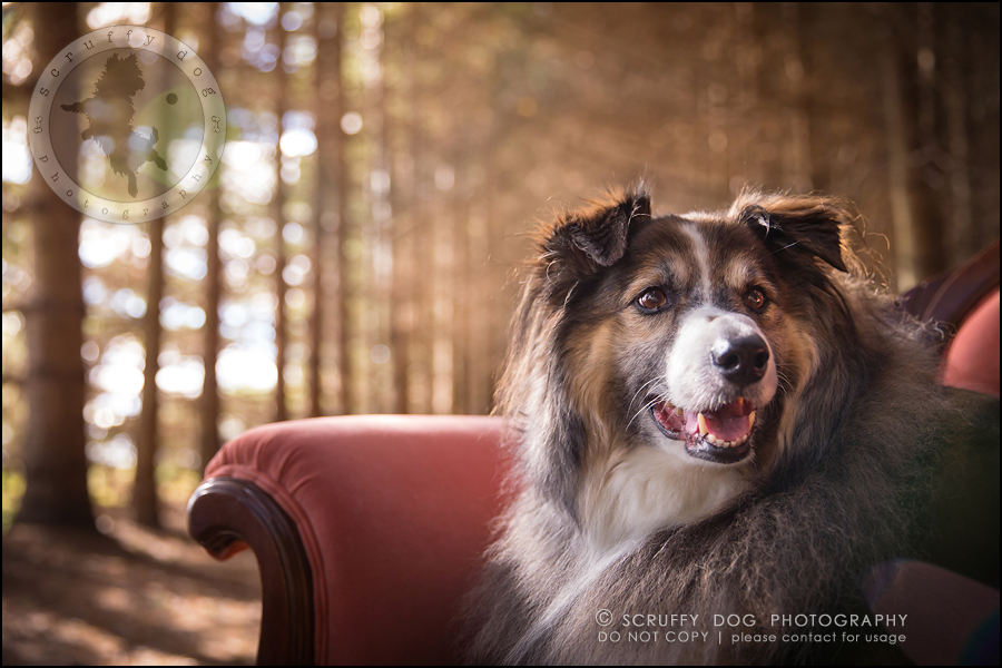 07waterloo_ontario_pet_exclusive_photographer_chinook george beckett-109