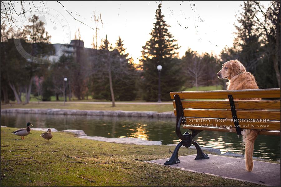 08_Kitchener_ontario_pet_photographer_bruin dawson smith-212